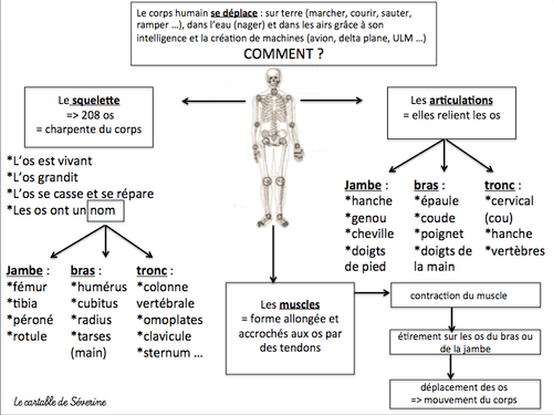 Carte mentale sciences : le corps humain