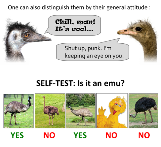 More differences between an emu and an ostrich