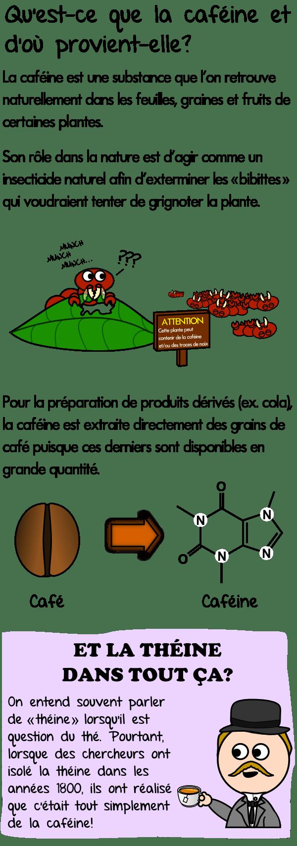 Rôle de la caféine dans la nature et dans les plantes , molécule , théine , thé