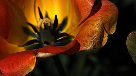 Onasill ~ Bill Badzo via Compfight cc