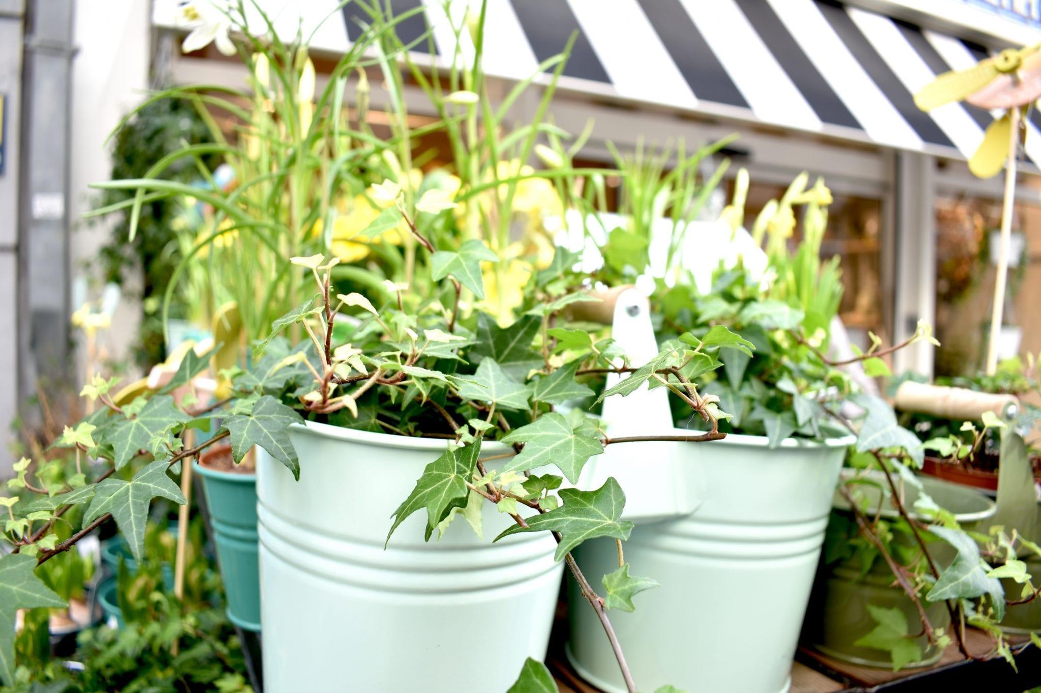 piante ingresso Dille & Kamille _Le Plume