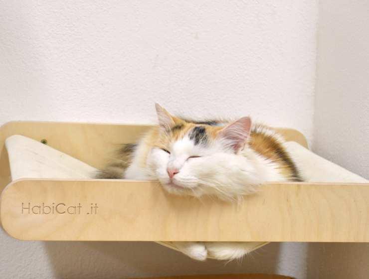 Cat Café di Chry - Carlotta - LePlume