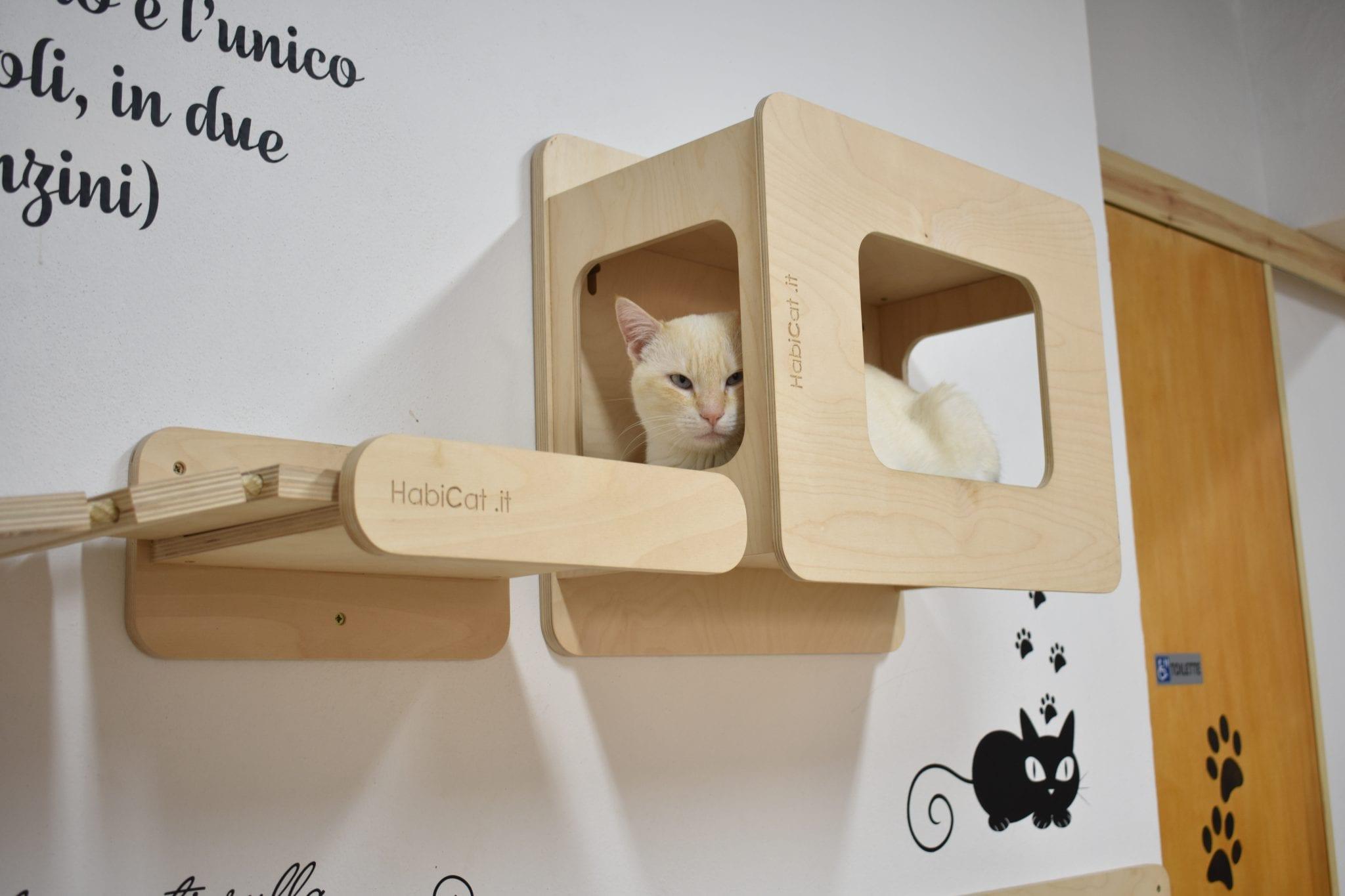 Cat Café di Chry - gatto - LePlume