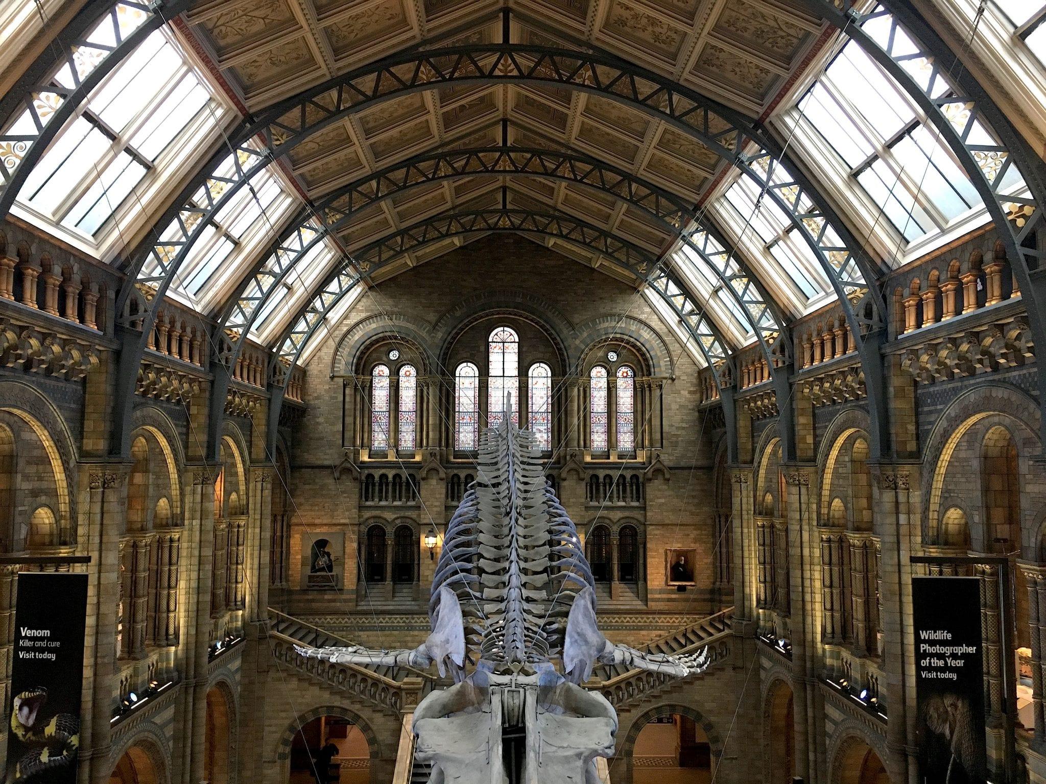 natural history museum - Prima volta a Londra - Le Plume