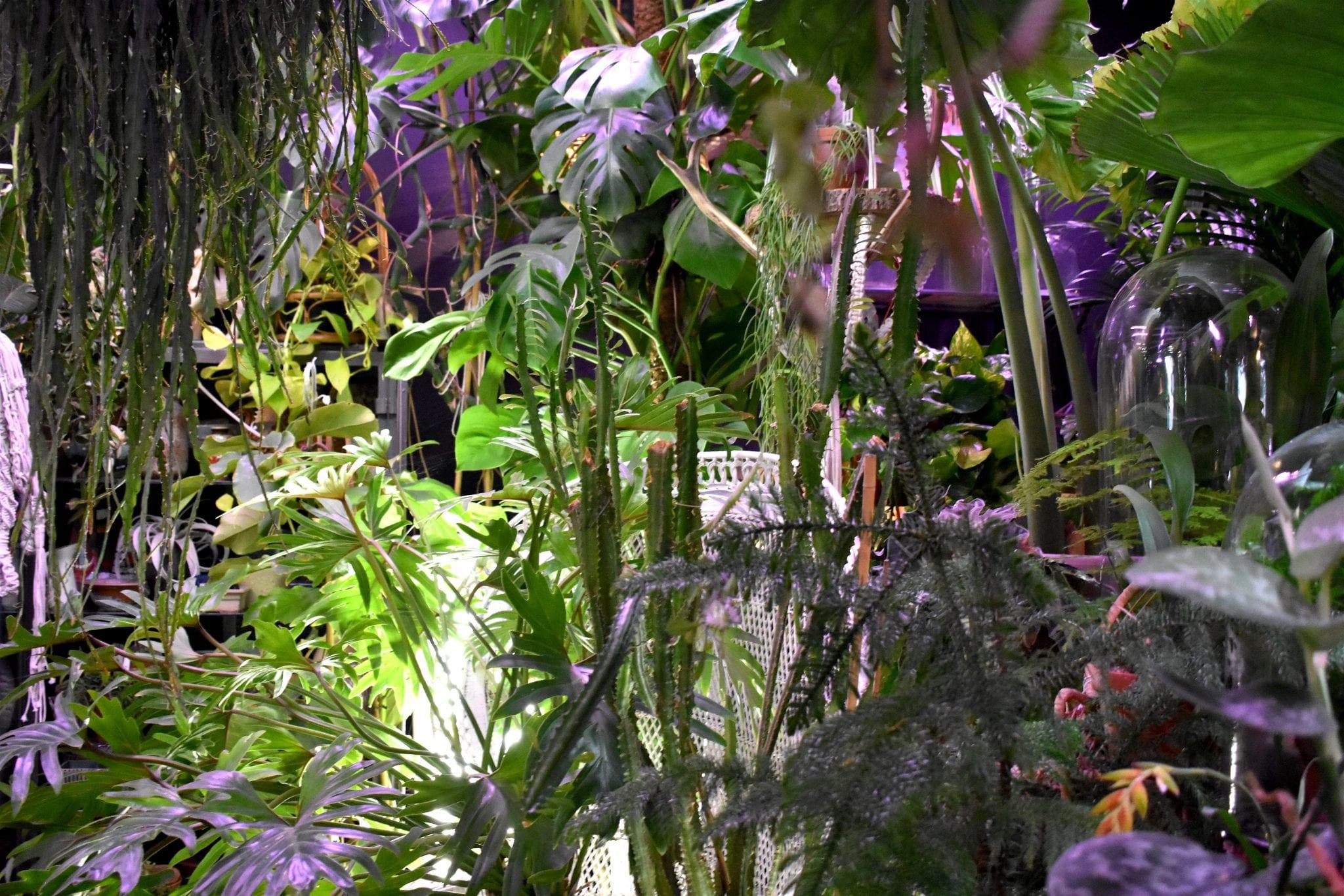 Atmosfera Botanica - Brut _ Bruxelles - Le Plume