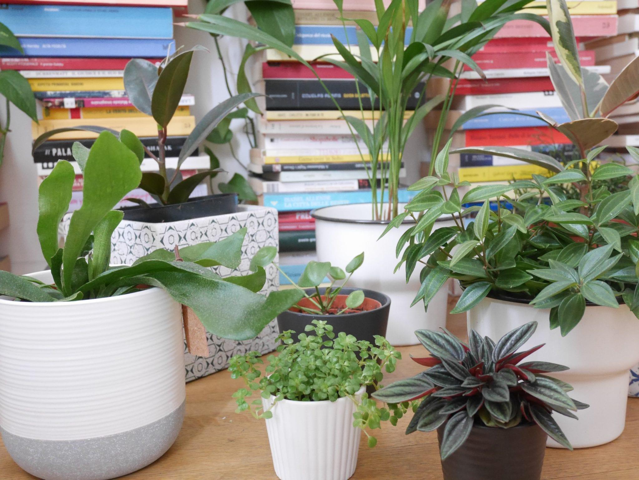 Piante Eleganti Da Appartamento vi presentiamo le piante di instagram - le plume