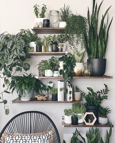 2 Indoor garden - Le Plume