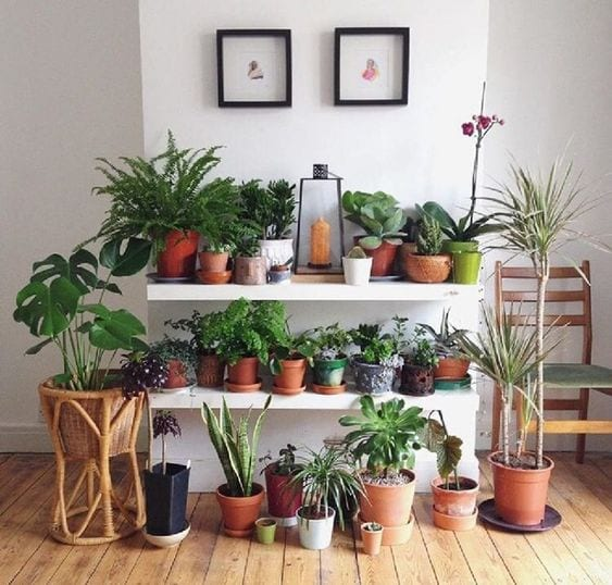 Cotto - Indoor garden - Le Plume