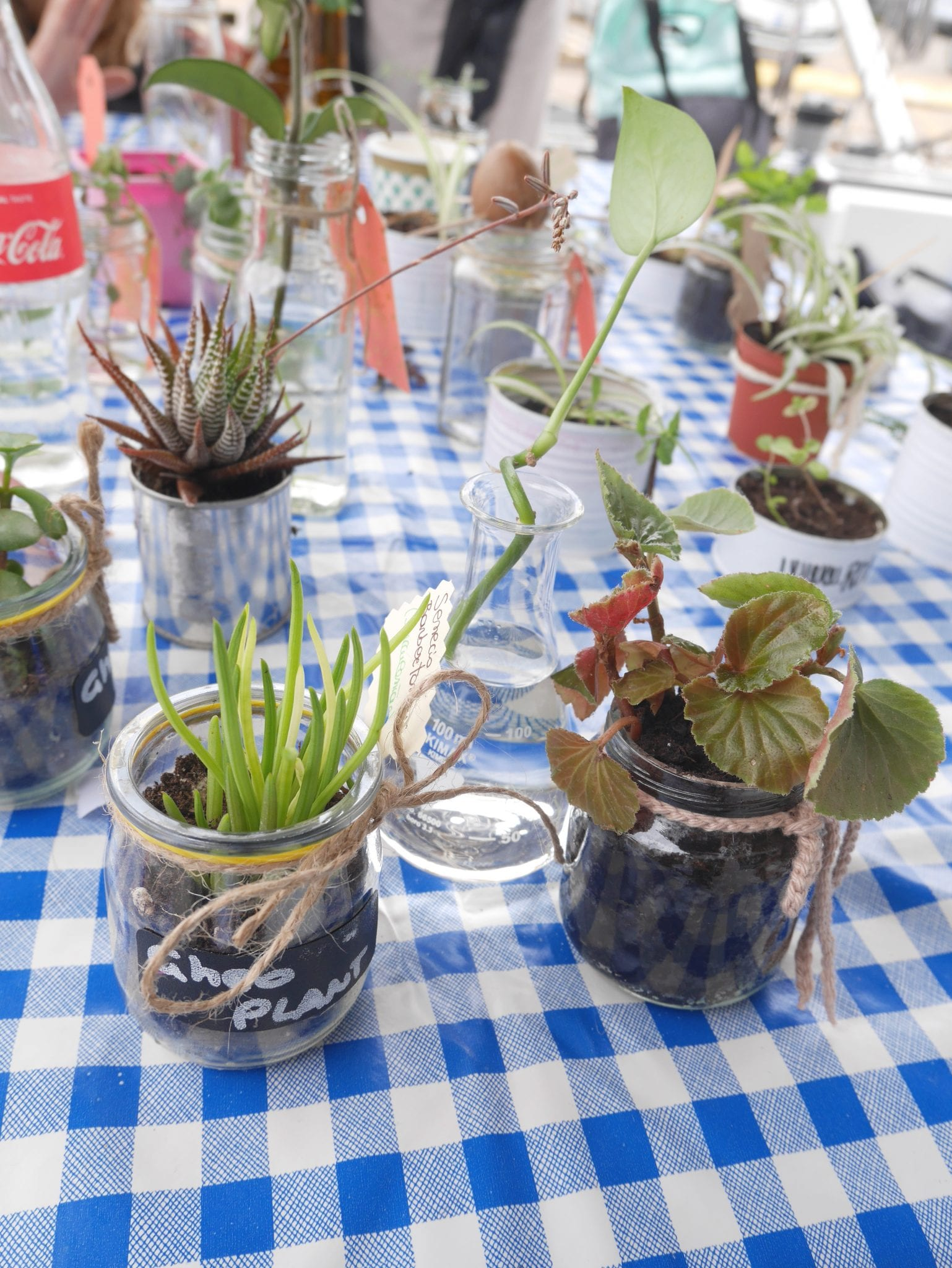 Plant swap on board 2 - Le Plume