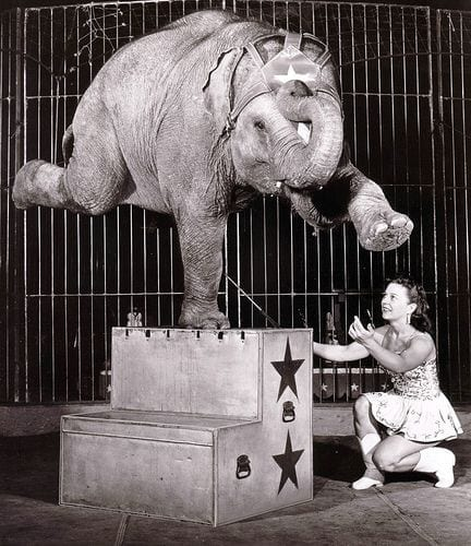 circo con gli animali - Le Plume