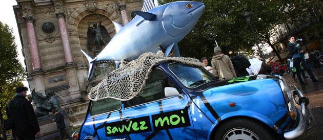 BATAILLE DU THON - Nouvelle action coup de poing de Greenpeace