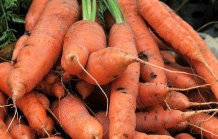 Nouvelle-Zélande: des bâtonnets de carottes aux prisonniers pour arrêter de fumer