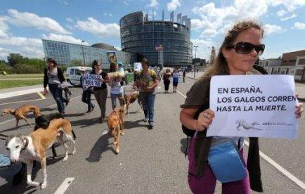 Plusieurs centaines de personnes accompagnées de leurs animaux ont manifesté samedi à Strasbourg pour protester contre les actes de maltraitance dont sont victimes selon eux les lévriers en Espagne.