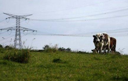 Dans leurs fermes bas-normandes, des éleveurs recensent, écoeurés, les maladies de leurs animaux qu'ils pensent liées au voisinage d'une ligne à très haute tension, et multiplient les actions en justice alors qu'une nouvelle THT est en construction dans leur région.