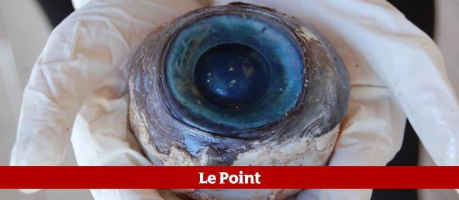 Cet oeil bleu gigantesque a été découvert sur une plage de Floride. © Florida Fish and Wildlife Conservation Commission