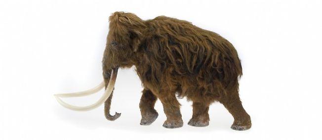 Modèle du mammouth retrouvé à Ilford (Angleterre).