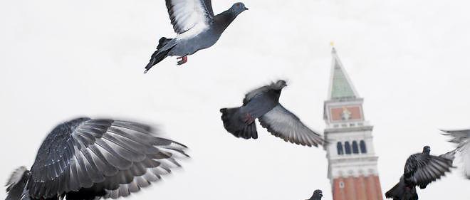 Des pigeons sont chargés à Londres de mesurer la qualité de l'air.