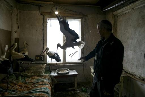 Des Bulgares offrent le gîte à des cigognes frigorifiées