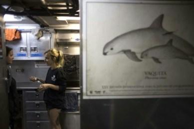 Dans la cuisine à bord du navire M/V Farley Mowat, un poster avec un dessin d'un marsouin du Pacifique, le 8 mars 2018 © GUILLERMO ARIAS AFP