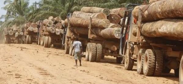 Exclusivité : Gambie : Dix-neuf containers remplis de bois en provenance de la Casamance prêts à embarquer