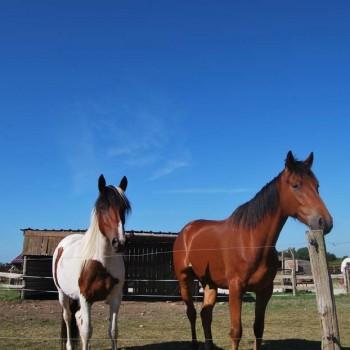 chevaux sous soleil - Ranch de Calamity Jane - Languidic Morbihan