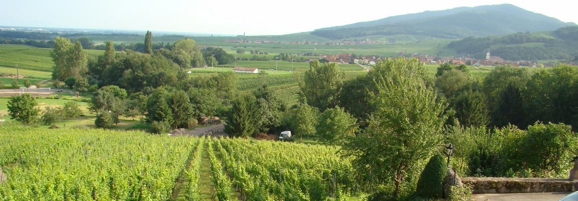 vignobles Alsace route des vins
