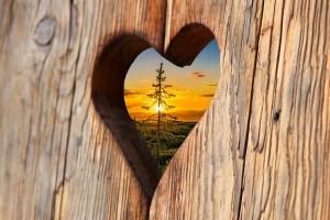 heart-2041866_960_720 heart-2041866_960_720