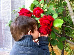 fripouille et les roses