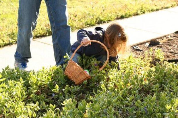 comment ramasser des oeufs