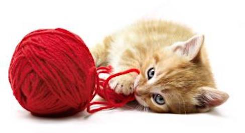 Entretien de la laine