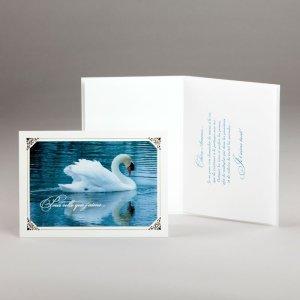 carte pour amoureux-cygne majestueux