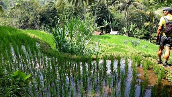 Découvrir Bali autrement : cascade de plaisir, histoire d'O. Rizieres à Batulantang