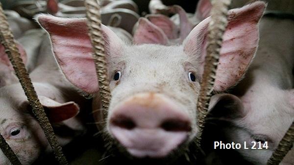 A la rencontre de Quentin webmaster du blog Merci Vegan. Les animaux