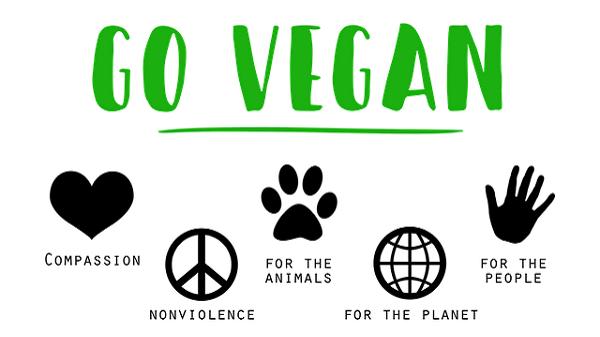 A la rencontre de Quentin webmaster du blog Merci Vegan. Go vegan