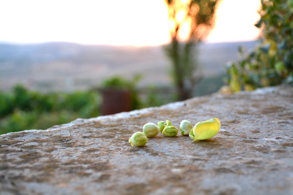 Une fois, j'étais au Liban, et j'ai photographié ces pois chiches devant un coucher de soleil dans le sud du pays.