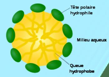250px-micelle_scheme-fr