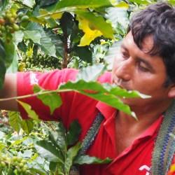 Oscar en train de récolter