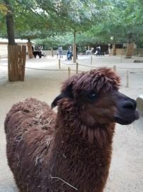 Animaux de la ferme - Zoo de la boissiere du doré