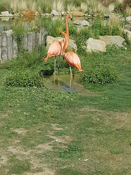 Zoo de la boissiere du doré