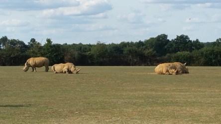 Rhinocéros - Zoo de la boissiere du doré