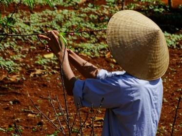 Jardinier à Dalat - Vietnam