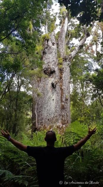 Waipoua Forest Nouvelle-Zélande