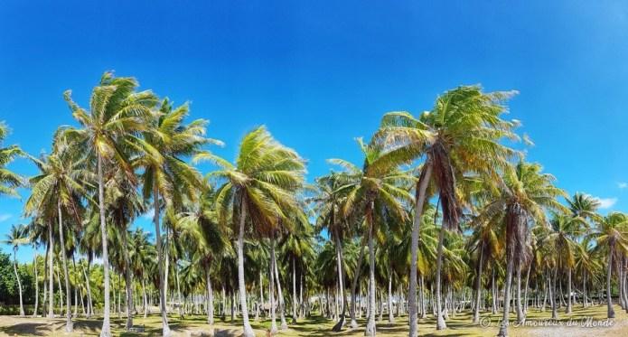 palmeraie Rangiroa