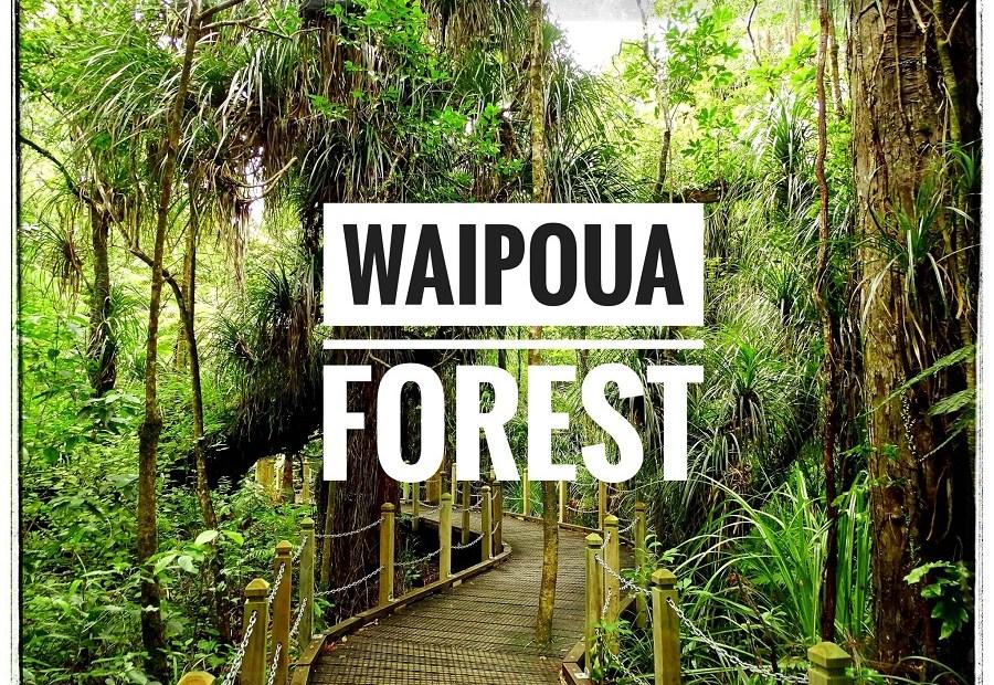 Waipoua Forest en Nouvelle-Zélande
