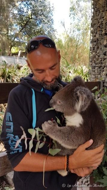 Prendre un koala dans ses bras au Gorge Wildlife park - Adelaïde - Australie