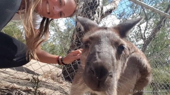Selfie kangourou au Gorge Wildlife park - Adelaïde - Australie