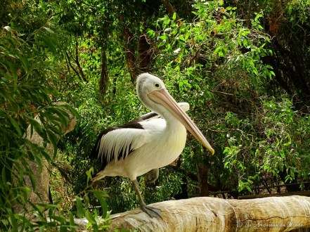 oiseau au Gorge Wildlife park - Adelaïde - Australie