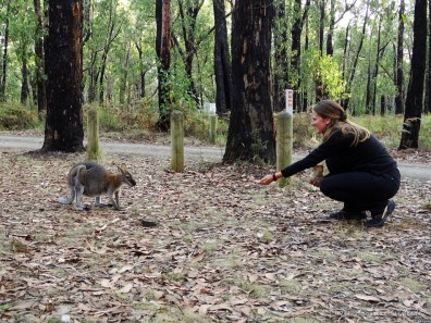 "free camp ""Sawpitpicnicarea - Mt Clay stateforest - Australie"