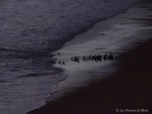 Voir des pingouins à London Arch - Great Ocean Road - Australie