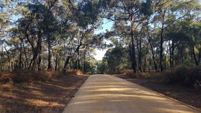 Piste pour accéder au Sawpit picnic area - Mt Clay state forest